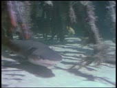 HBO Archives - Wild Sharks