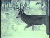 HBO Archives - Alaskan Wildlife